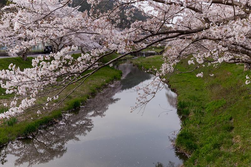 2021桜咲く京都 夕景・やすらぎの道(田原川)_f0155048_22323047.jpg
