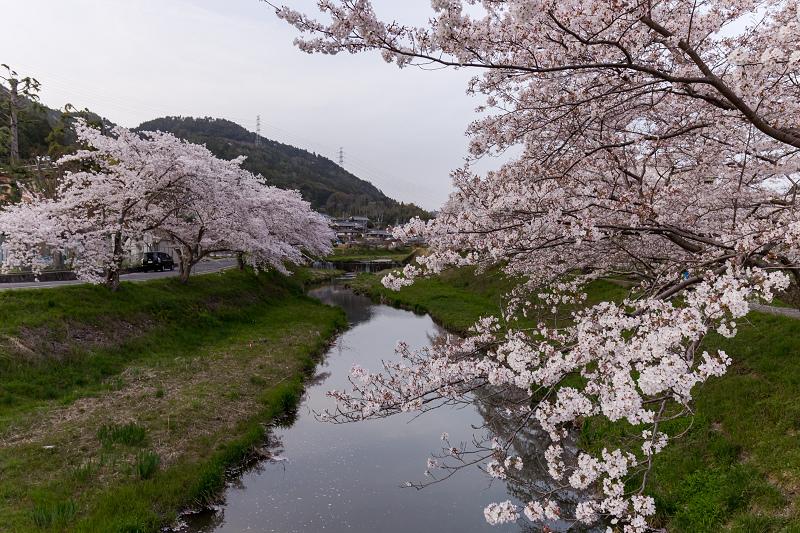 2021桜咲く京都 夕景・やすらぎの道(田原川)_f0155048_22323688.jpg