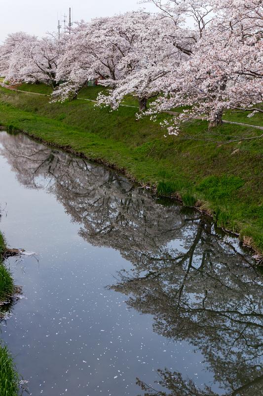 2021桜咲く京都 夕景・やすらぎの道(田原川)_f0155048_22324288.jpg