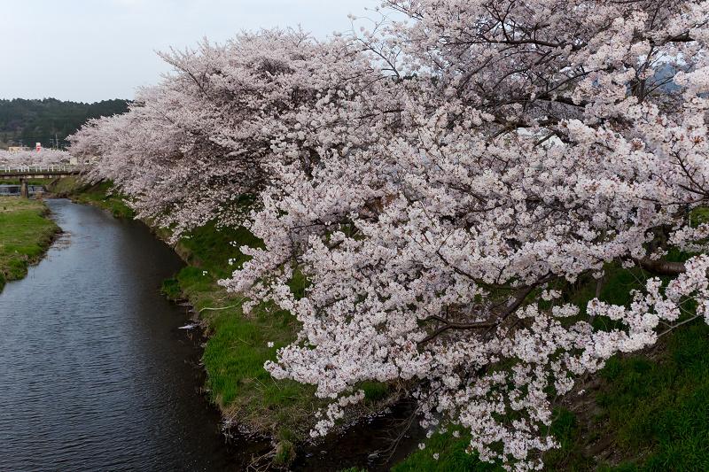 2021桜咲く京都 夕景・やすらぎの道(田原川)_f0155048_22325457.jpg