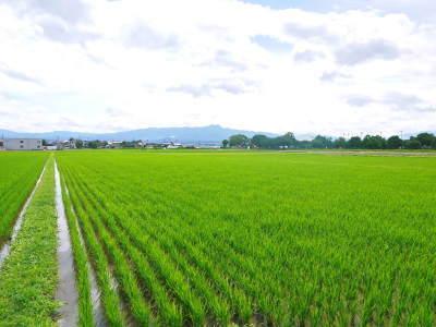 七城米 熊本県菊池市七城町の「長尾農園」さんのお米は今年も見事に美しすぎる田んぼで元気に成長中!_a0254656_17432202.jpg
