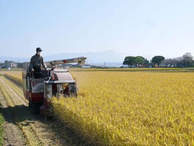 七城米 熊本県菊池市七城町の「長尾農園」さんのお米は今年も見事に美しすぎる田んぼで元気に成長中!_a0254656_17442549.jpg