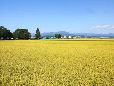 七城米 熊本県菊池市七城町の「長尾農園」さんのお米は今年も見事に美しすぎる田んぼで元気に成長中!_a0254656_17455532.jpg