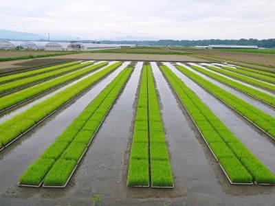 七城米 熊本県菊池市七城町の「長尾農園」さんのお米は今年も見事に美しすぎる田んぼで元気に成長中!_a0254656_17465999.jpg