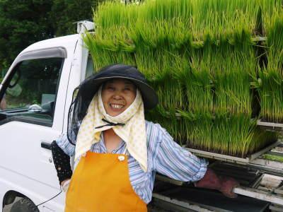 七城米 熊本県菊池市七城町の「長尾農園」さんのお米は今年も見事に美しすぎる田んぼで元気に成長中!_a0254656_17475962.jpg
