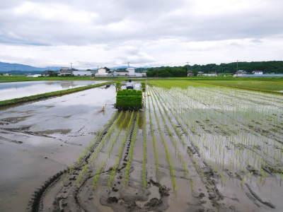 七城米 熊本県菊池市七城町の「長尾農園」さんのお米は今年も見事に美しすぎる田んぼで元気に成長中!_a0254656_17484107.jpg