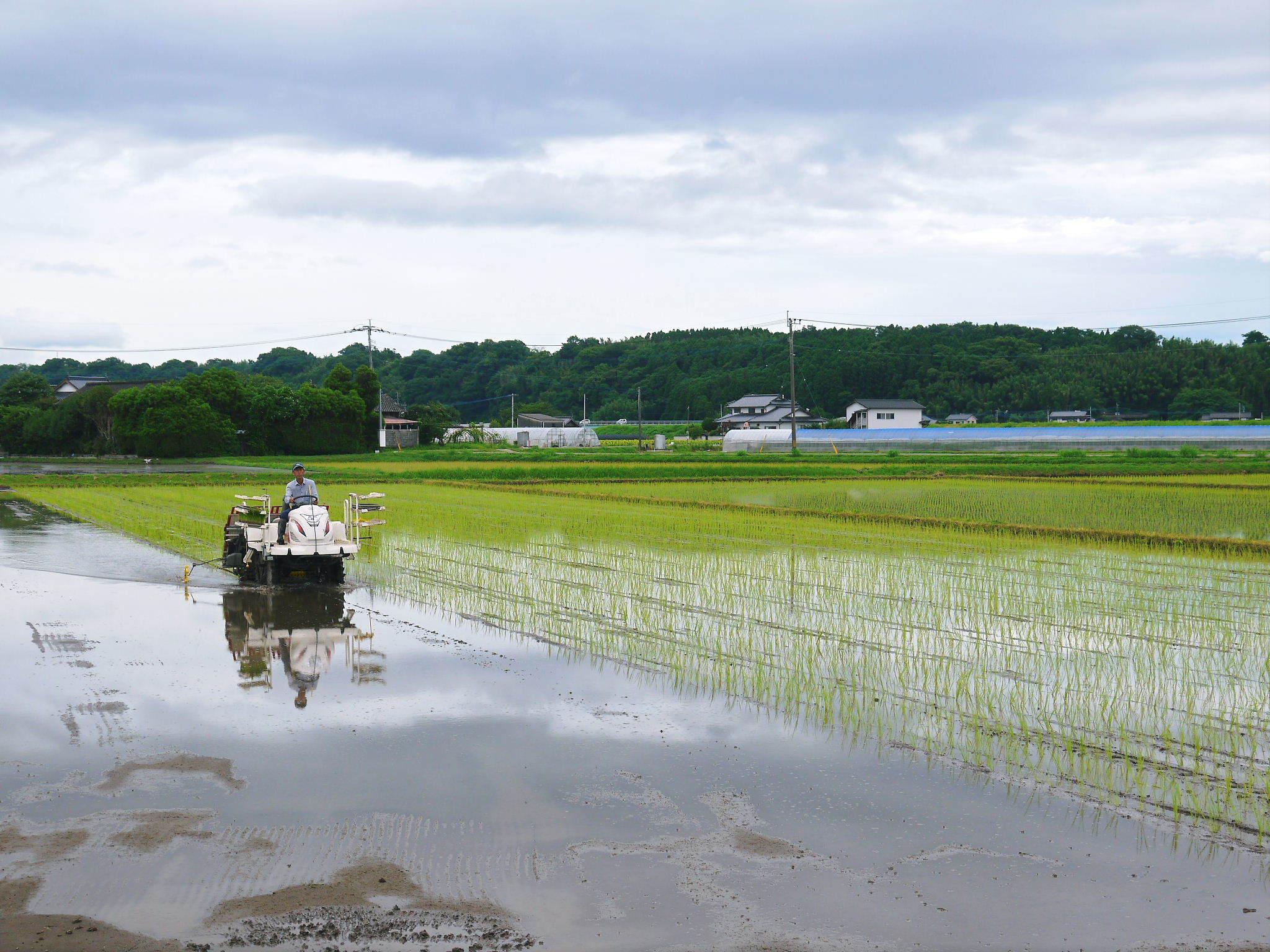 七城米 熊本県菊池市七城町の「長尾農園」さんのお米は今年も見事に美しすぎる田んぼで元気に成長中!_a0254656_17504995.jpg