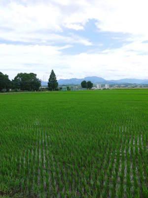 七城米 熊本県菊池市七城町の「長尾農園」さんのお米は今年も見事に美しすぎる田んぼで元気に成長中!_a0254656_17535822.jpg