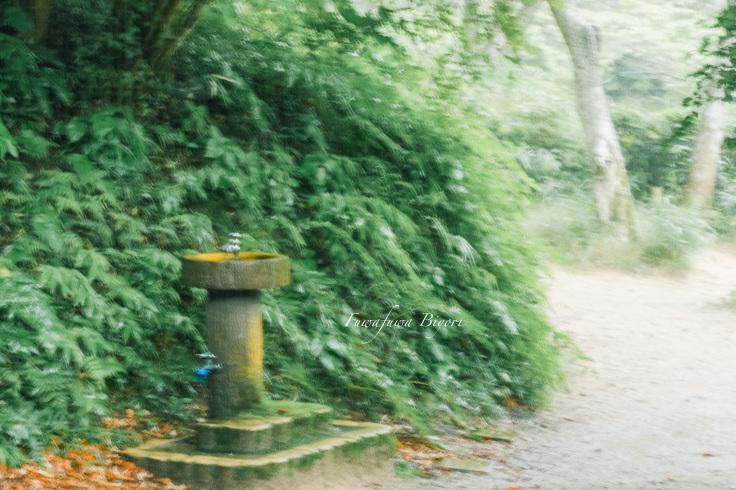 雨降りの森 **_d0344864_11223173.jpg