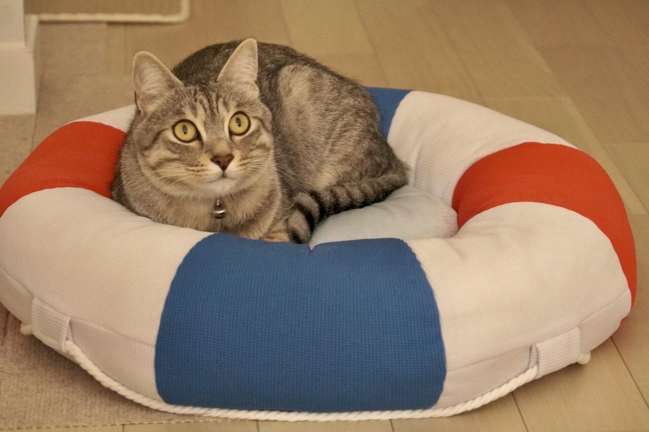 【里親決定の猫】中延のふうちゃん。_a0170297_01320936.jpeg
