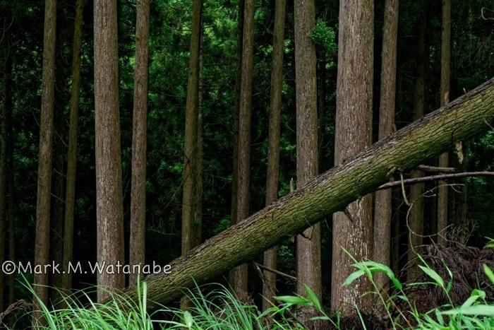 雨上がりの森_e0135098_21215665.jpg