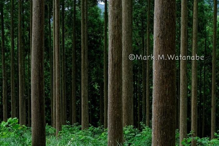 雨上がりの森_e0135098_21220533.jpg