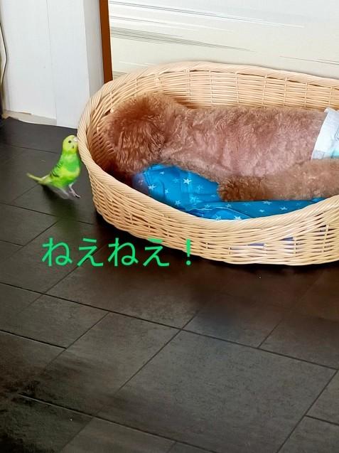 黄緑きみ子さん劇場_c0162773_14221927.jpg