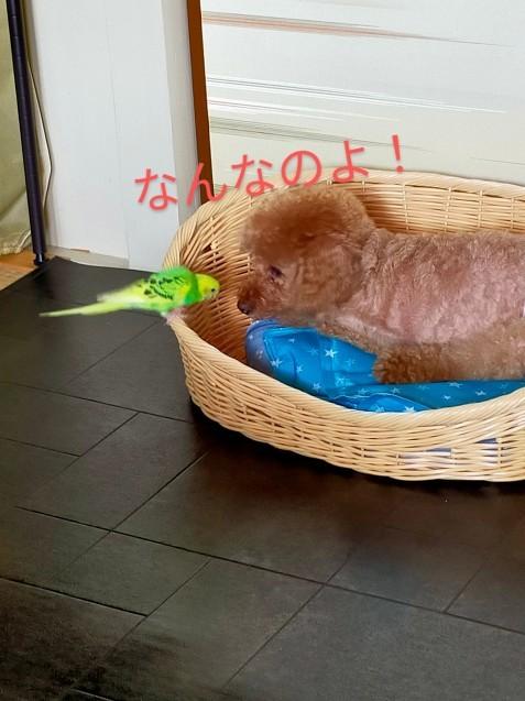 黄緑きみ子さん劇場_c0162773_14234926.jpg