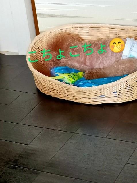 黄緑きみ子さん劇場_c0162773_14241999.jpg