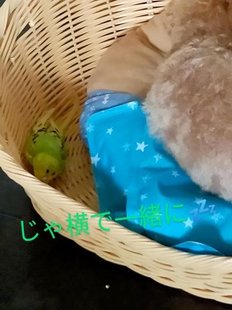 黄緑きみ子さん劇場_c0162773_14282525.jpg