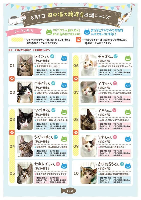 【YouTube】緊急子猫レスキューが入った為メイちゃんのベビ達を移動させます【kittens】_c0405294_06263253.jpg