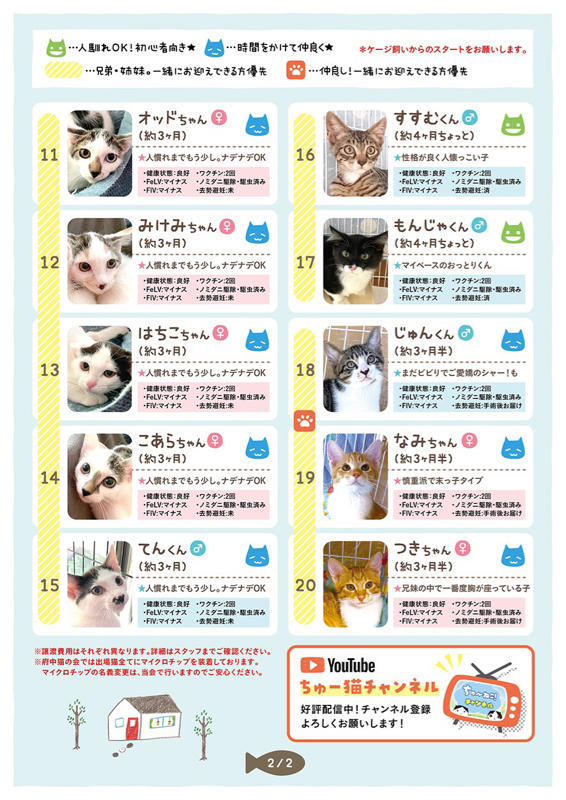 【YouTube】緊急子猫レスキューが入った為メイちゃんのベビ達を移動させます【kittens】_c0405294_06263324.jpg