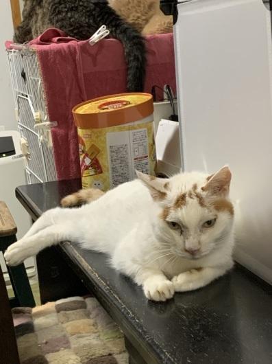 【お預かり猫】お台場の小ちゃん、ご機嫌!_a0170297_10411295.jpeg