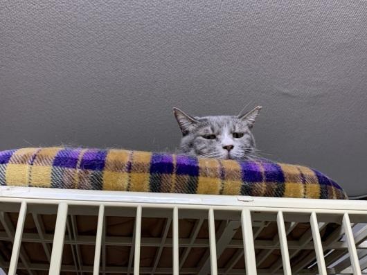 【お預かり猫】お台場の小ちゃん、ご機嫌!_a0170297_10481610.jpeg