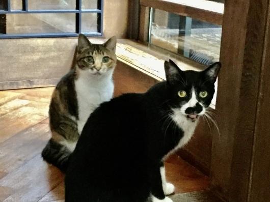 【友人宅の猫】7月、渋谷の猫たち。_a0170297_12075942.jpeg