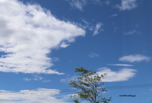 ギリギリ台風から助かったヤマユリ_a0304423_00442060.jpg