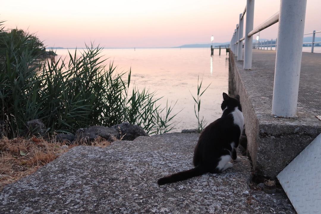 猫かわいい夕焼けの湖と歯医者はつらいよ_f0234936_22450345.jpg