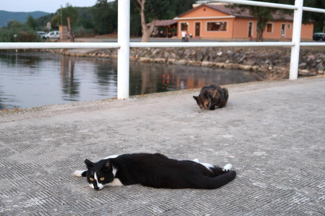 猫かわいい夕焼けの湖と歯医者はつらいよ_f0234936_22513303.jpg