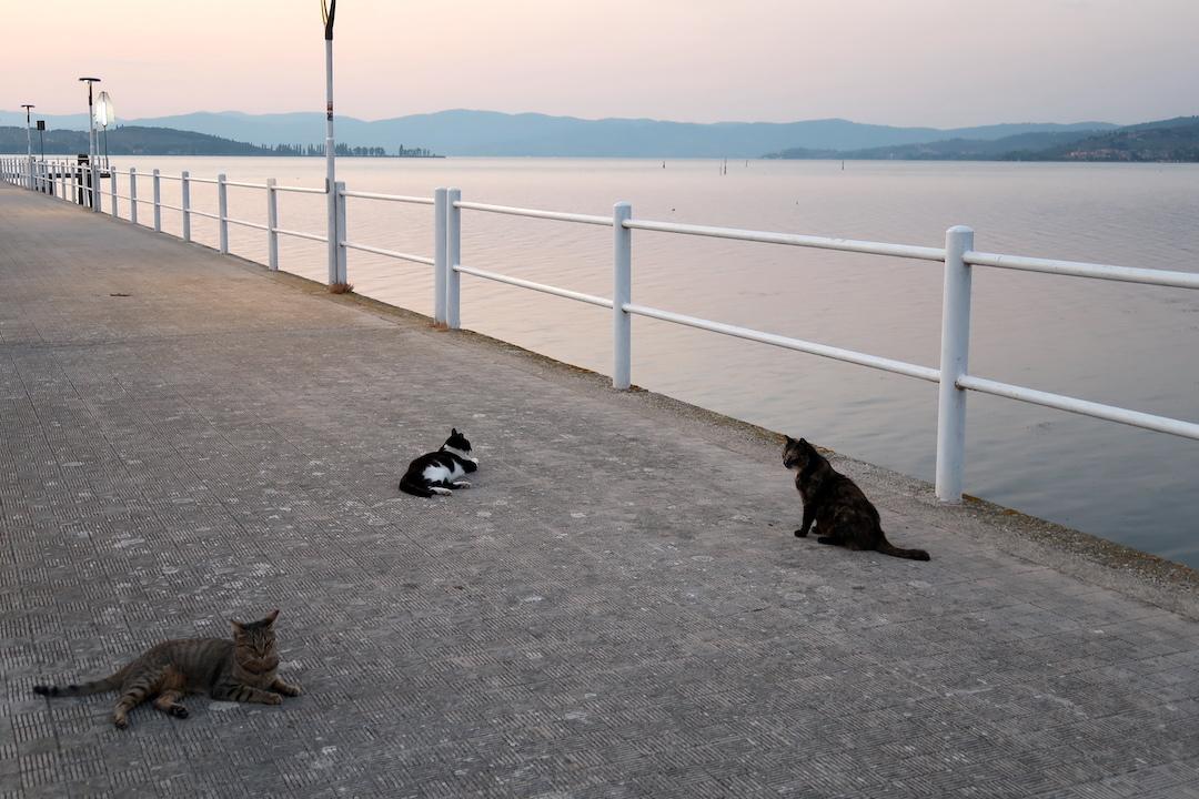 猫かわいい夕焼けの湖と歯医者はつらいよ_f0234936_22562050.jpg