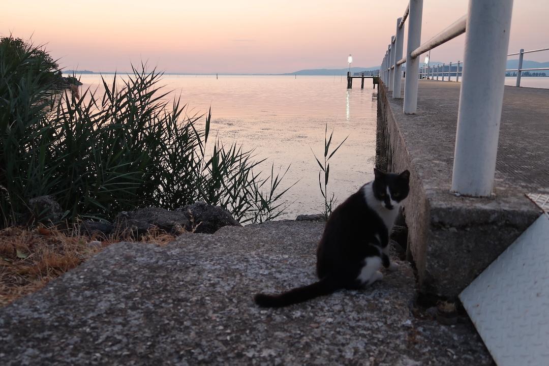 猫かわいい夕焼けの湖と歯医者はつらいよ_f0234936_23112065.jpg