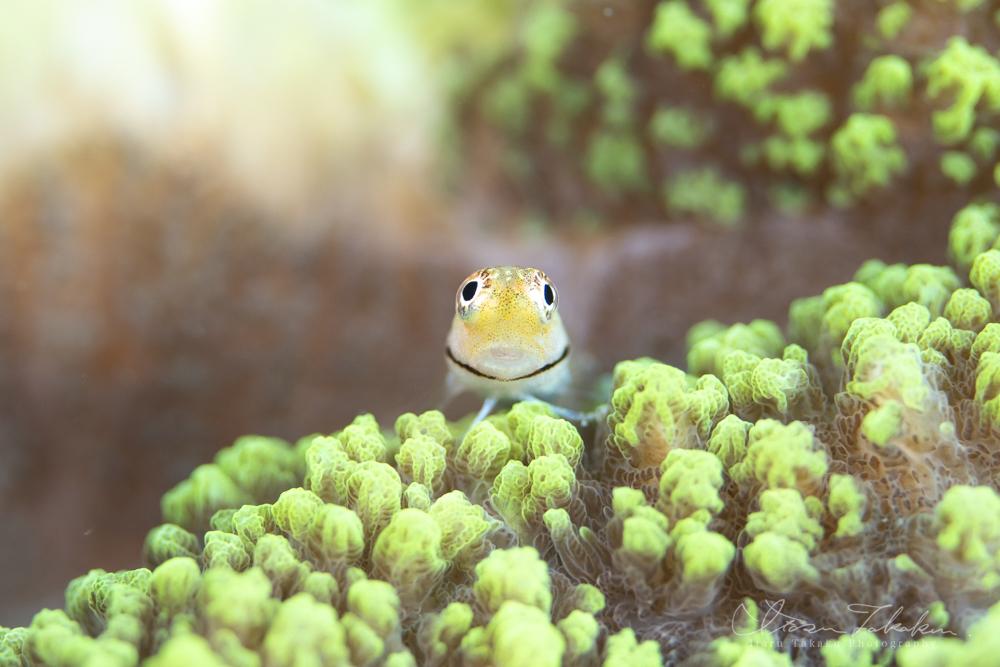 戻ってきた夏!ジョーフィッシュの幼魚祭り。_b0186442_06153526.jpg