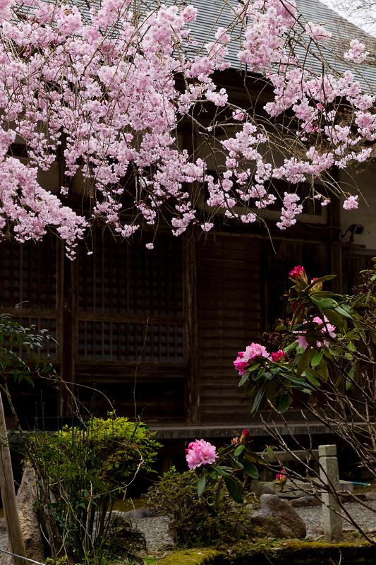 2021桜咲く京都  桜咲く弓削川_f0155048_22354325.jpg