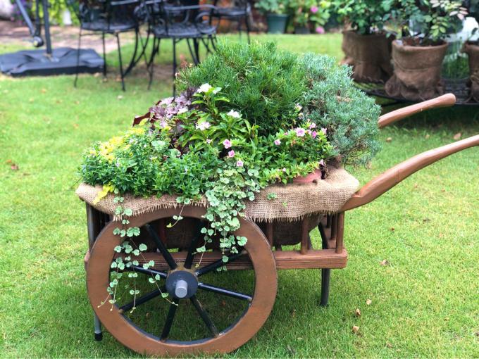 調子に乗ってやってしまった(T . T)と、〝川中島桃〟が届きました〜♫ - 薪割りマコのバラの庭