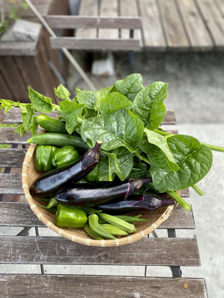 朝の収穫 〜夏野菜とブルーベリーと〜_c0334574_13160527.jpeg