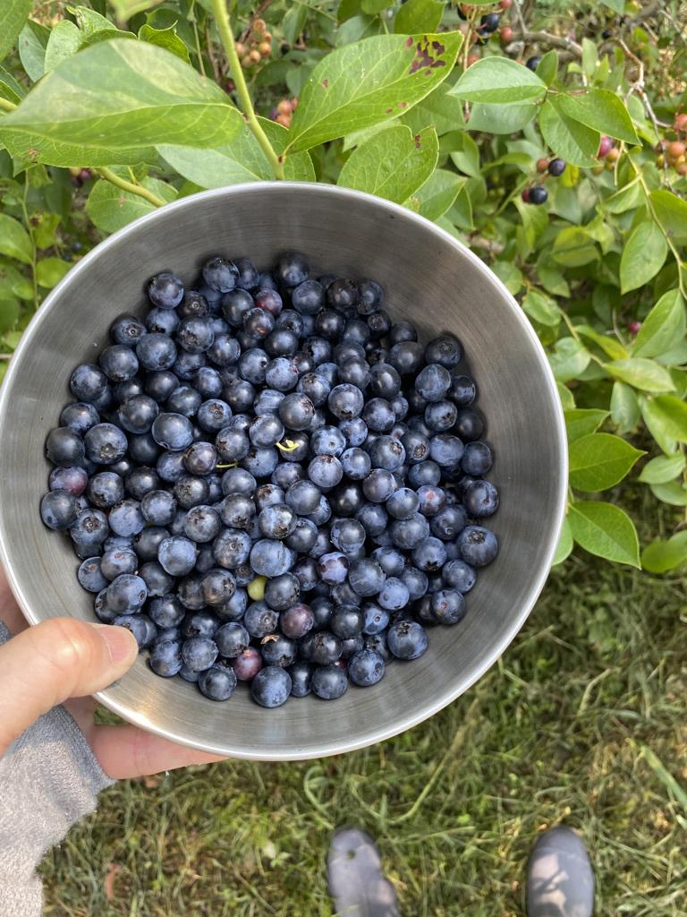 朝の収穫 〜夏野菜とブルーベリーと〜_c0334574_13171932.jpeg