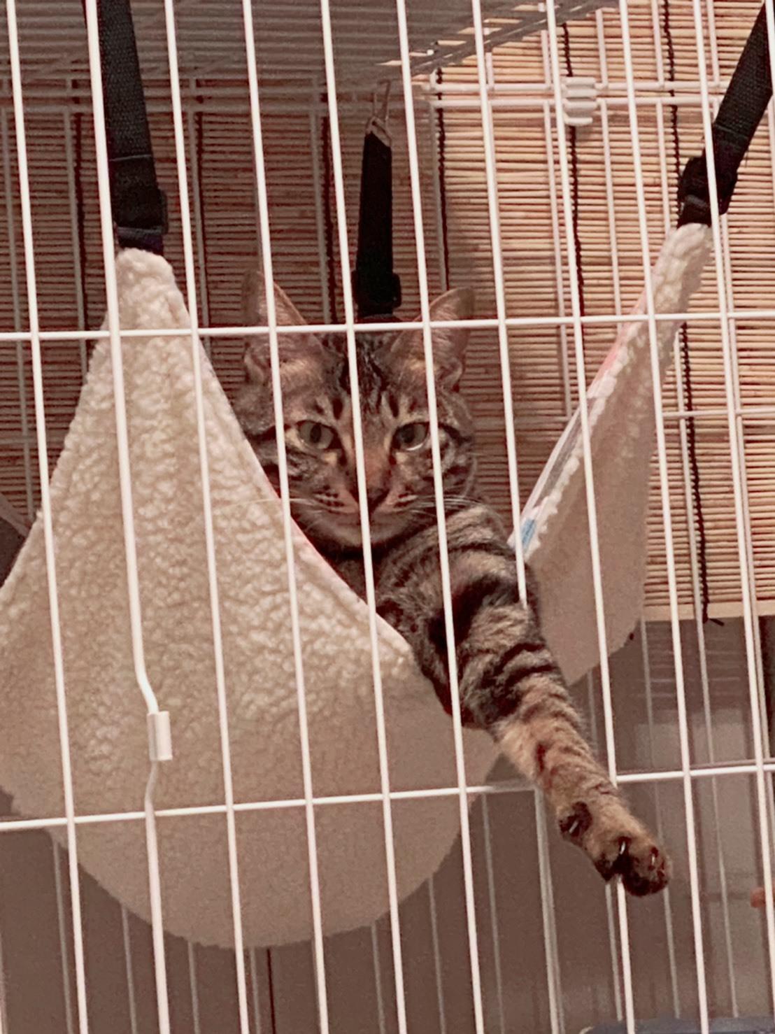 【里親決定の猫】両国の風ちゃん!_a0170297_12255077.jpeg