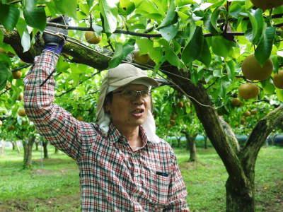 熊本梨 令和3年度の初出荷!まずはこだわりの樹上完熟梨『幸水』を朝採り即日発送でお届けします!_a0254656_17552198.jpg