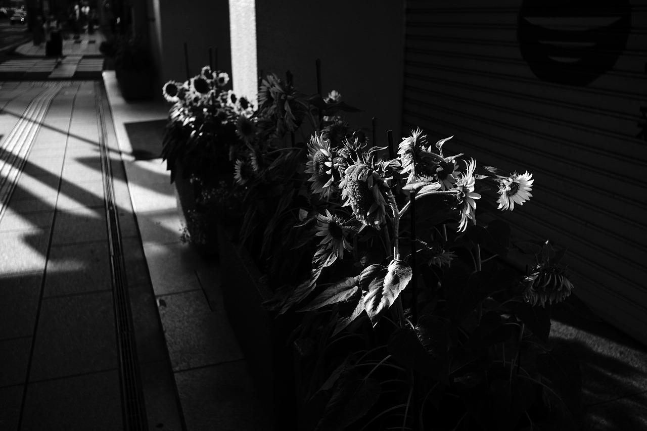 真夏の斜光を観たい#02 20210731_c0082800_23324064.jpg