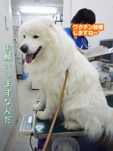 ワクチン2回目_c0062832_13324513.jpg