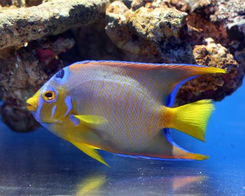 海水魚・サンゴ入荷!!_d0228343_17332323.jpg