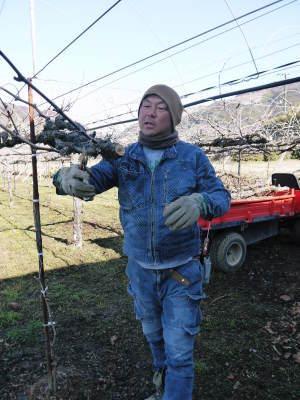熊本ぶどう 社方園 高級種なしぶどうを大好評販売中!令和3年の社方園の「ぶどう祭り」は中止です! _a0254656_20040736.jpg