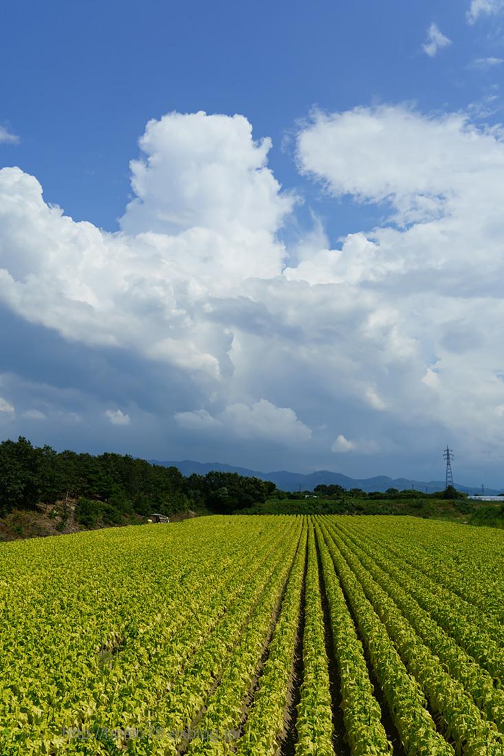 夏の畑_e0214470_09542808.jpg