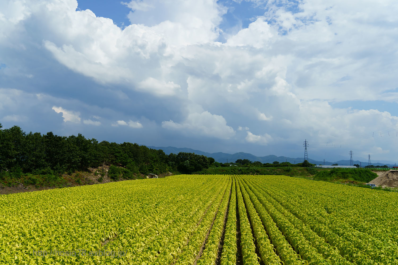 夏の畑_e0214470_09581296.jpg