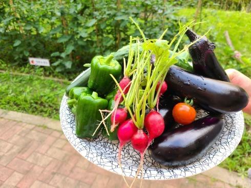 夏野菜_e0177644_16021226.jpg