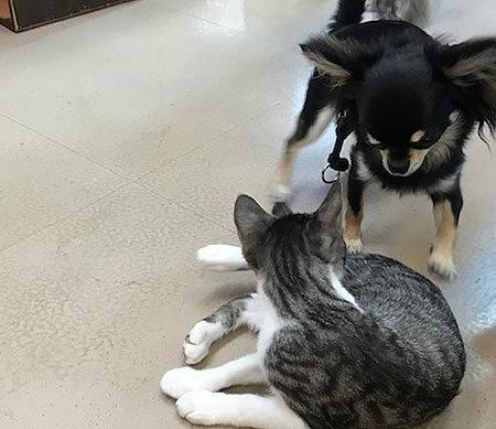 今日までお預かりの保護猫ちゃん_e0362456_18485847.jpg