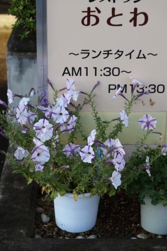 朝の散歩 2021.8.2 快晴_c0075701_06440229.jpg