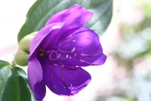 庭の花_c0404426_19004900.jpg