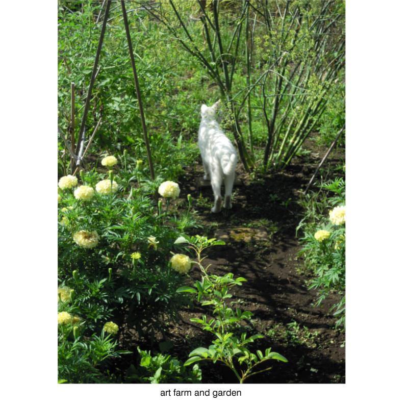 8月の庭/art farm & garden_b0290469_10124208.jpg