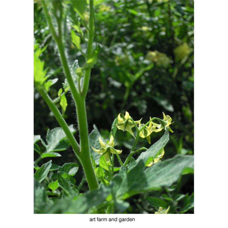 8月の庭/art farm & garden_b0290469_10131547.jpg