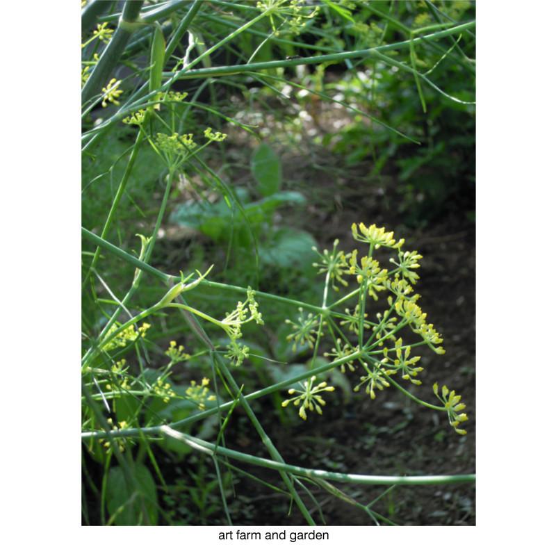 8月の庭/art farm & garden_b0290469_10143707.jpg